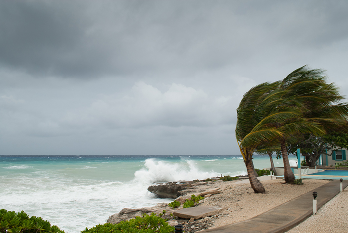 Hurricane and palm trees