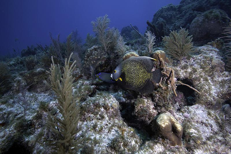 Best Scuba Diving In The Florida Keys