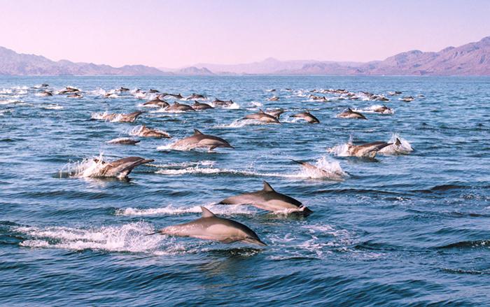 La Paz dolphins