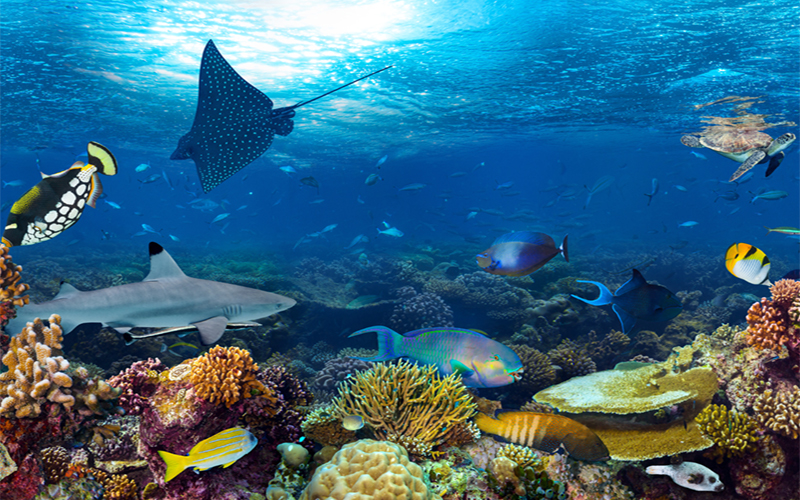 5 Amazing Diving Sites in the Maldives