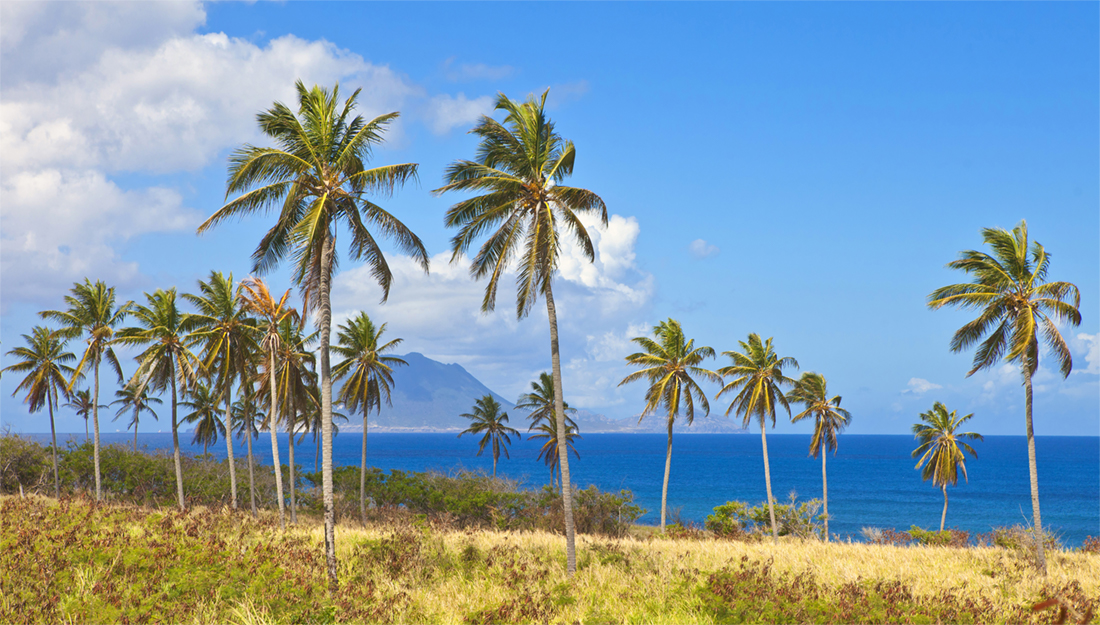 Palm trees in St Kitts