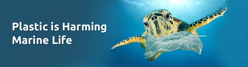 Plastic is harming marine life banner