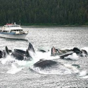 Alaskan Story and whales