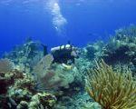 Scuba diving in the BVI