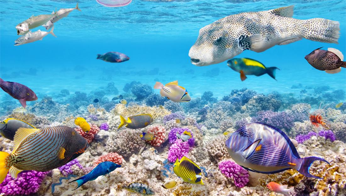 Tahiti diving